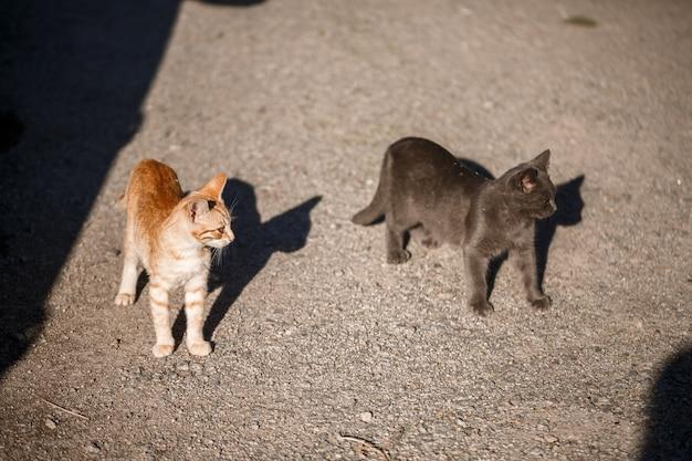 Dwa koty czarno-czerwone bawią się ze sobą w słońcu