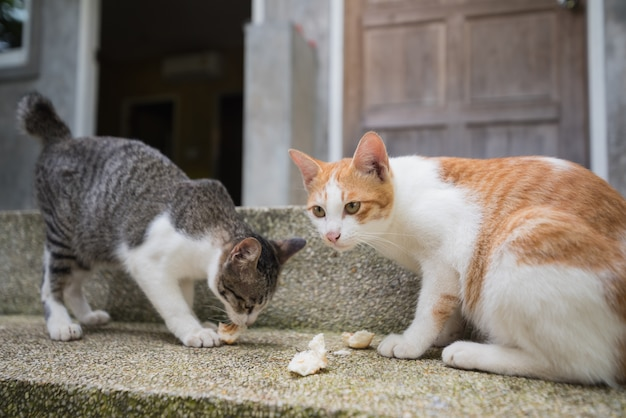 Dwa koty jedzą na podłodze