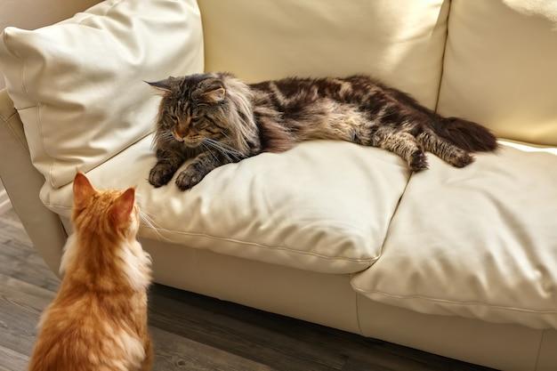 Dwa koty leżące na białej kanapie w domu i