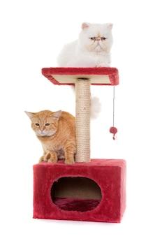 Dwa koty na drapaku