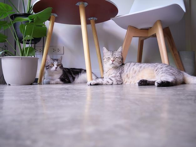 Dwa koty odpoczywają i śpią na podłodze i oczyszczaczu powietrza monstera, sansevieria w salonie