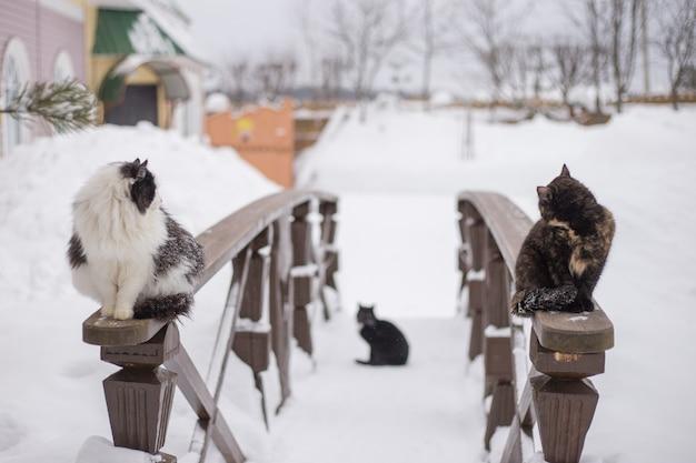 Dwa koty siedzą zimą na drewnianej poręczy w pobliżu wiejskiego domu