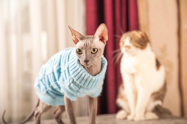 Dwa koty w domu kłócą się i zawrzyj pokój.