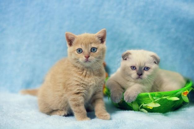 Dwa małe kociaki