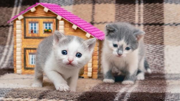 Dwa małe kocięta bawią się w pobliżu domku z zabawkami. zwierzęta są przyjaciółmi.