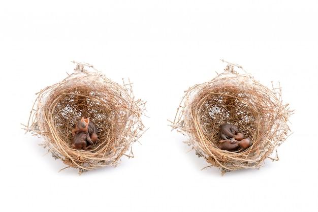 Dwa małe ptaki w gnieździe brązowej suchej trawy.