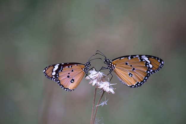 Dwa motyle na roślinach kwiatowych