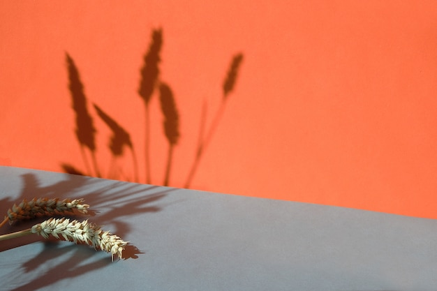 Dwa odcienie koloru pomarańczowego i szarego papieru z kłosami pszenicy rzucającymi długie cienie, kopia przestrzeń.