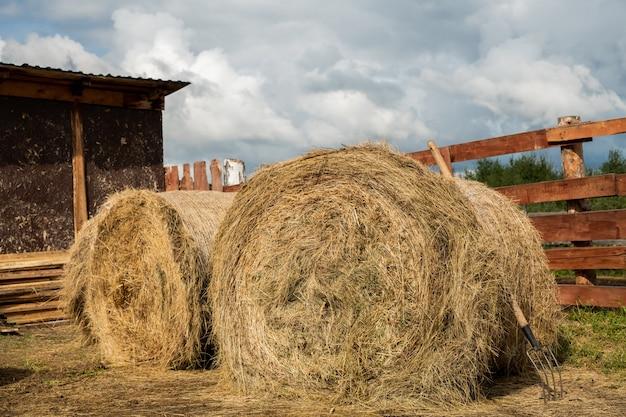 Dwa ogromne zwinięte stosy świeżego siana i widelców przy stodole i drewnianym płocie na terenie rancho nad zachmurzonym niebem