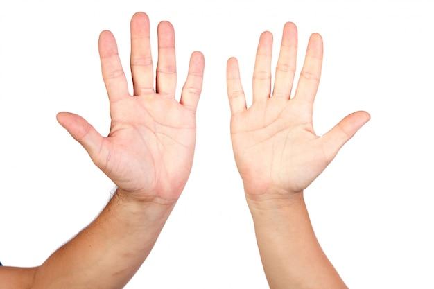 Dwa palmy odizolowywającej na białym tle