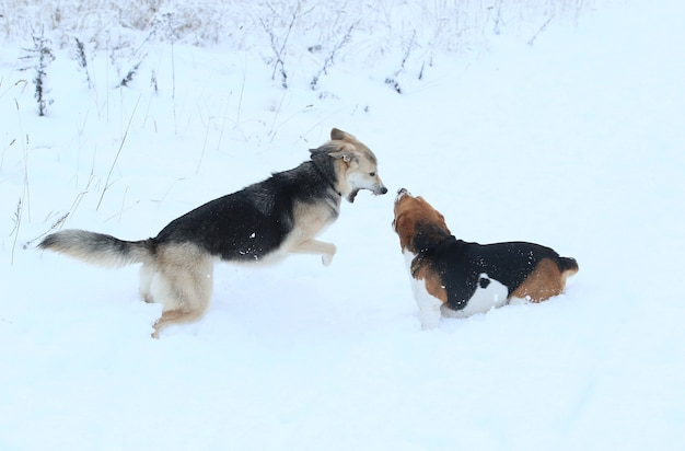 Dwa piękne psy