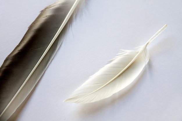 Dwa pióro skrzydła ptaka na jasnoszarym tle