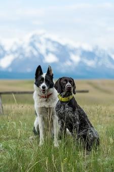 Dwa psy podróżnika siedzą na tle górskich szczytów. psy myśliwskie na wycieczce.