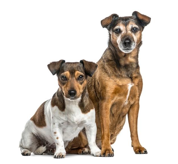 Dwa psy siedzące obok siebie, na białym tle