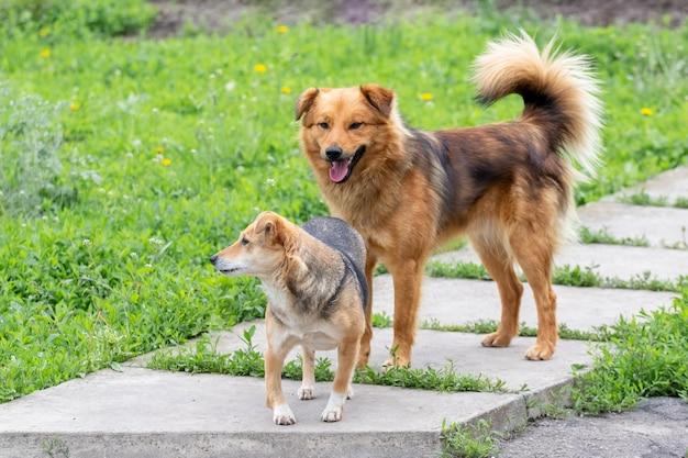 Dwa psy stoją na alejce w ogrodzie wśród zielonej trawy
