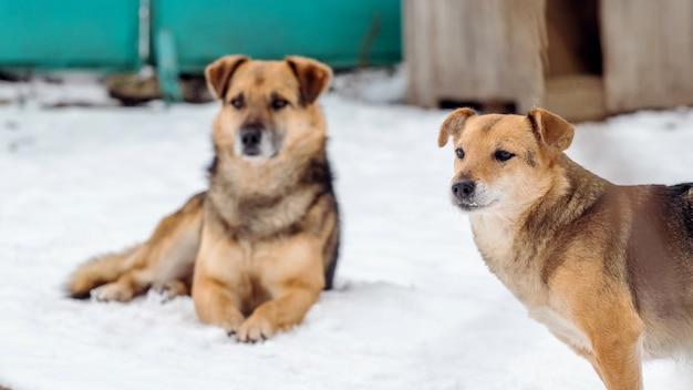 Dwa psy zimą na śniegu w pobliżu budy