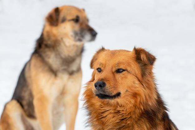 Dwa psy zimą na zewnątrz na tle białego śniegu