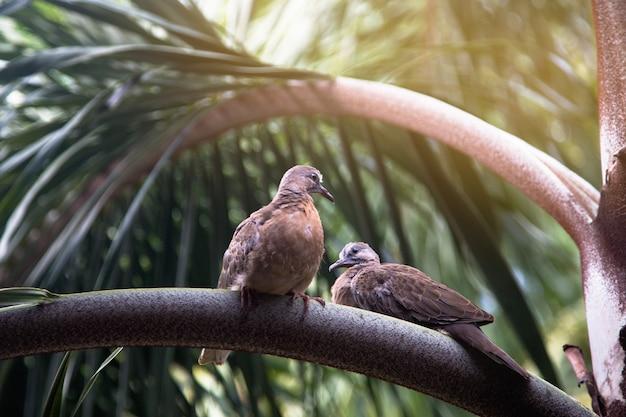 Dwa ptaki siedzą na palmie z bliska