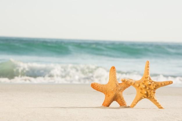 Dwa rozgwiazda przechowywane na piasku