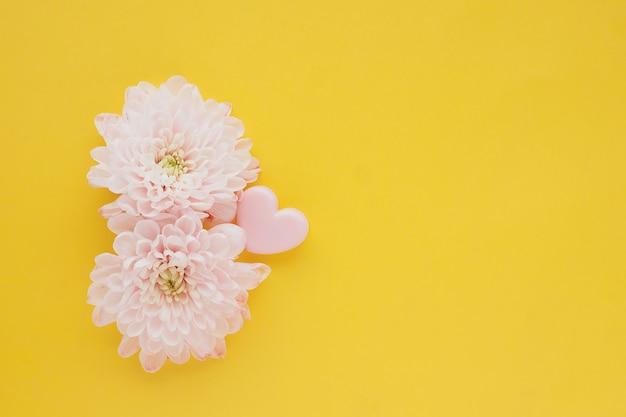 Dwa różowe kwiaty chryzantemy i różowy klips serca na jasnożółtym stole.