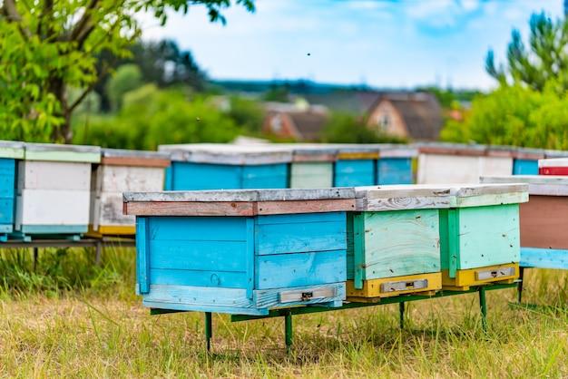 Dwa rzędy kolorowych uli wykonanych z drewna w formie pudełek na pasiece na łące