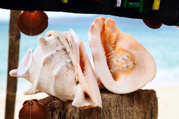 Dwa seashells na morze plaży, boracay wyspa, filipiny