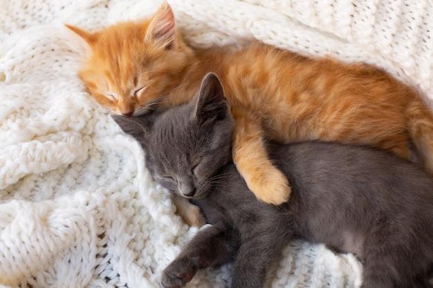 Dwa słodkie kociaki pręgowane śpiące i przytulające się na białym szaliku z dzianiny. zwierzę domowe.