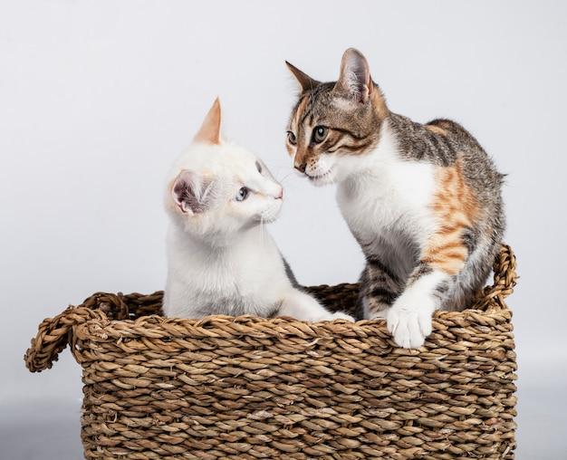 Dwa słodkie młode kocięta razem schowane w wiklinowym koszu