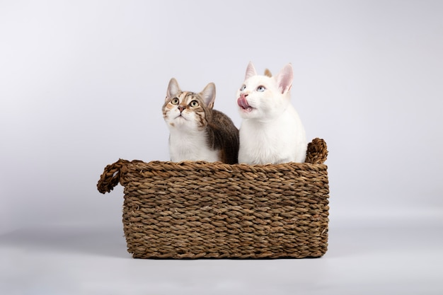 Dwa słodkie młode kocięta razem w wiklinowym koszu