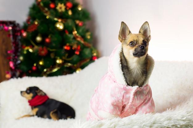 Dwa śmieszne psy na drzewie nowego roku