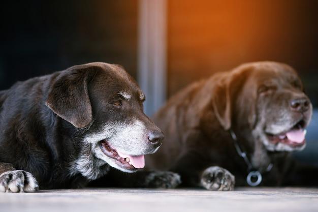 Dwa stare psy pilnują domu na zewnątrz,