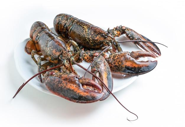 Dwa świeże homary na białym talerzu na białym tle