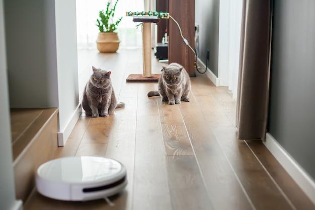 Dwa szare koty brytyjskie obserwują pracę robota odkurzającego