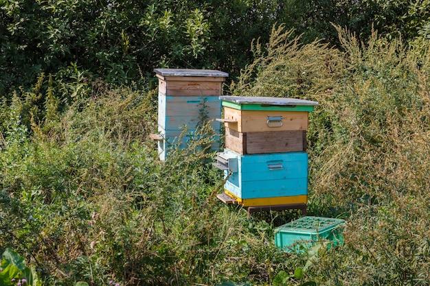 Dwa ule pszczele stoją na trawie na łące ule pszczół w letniej łące dzikich kwiatów