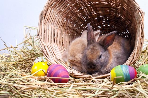 Dwa urocze małe króliki lubią psotnie bawić się w koszach z drewna i słomy. istnieje wiele kolorowych pisanek.