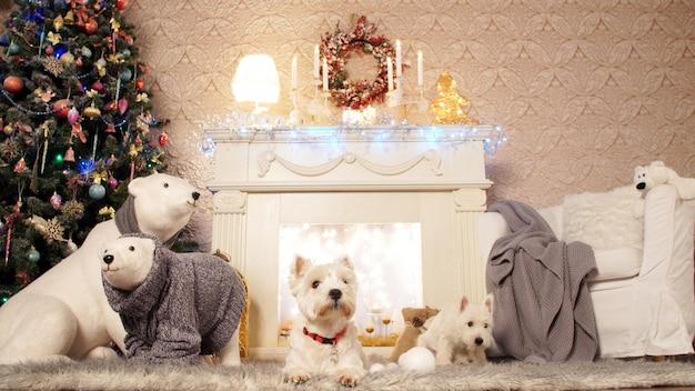 Dwa urocze psy w boże narodzenie wnętrze. świąteczne dekoracje we wnętrzu pokoju