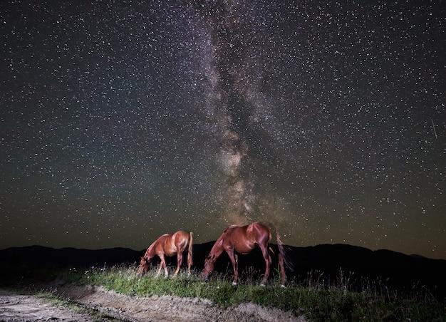 Dwa wolne konie pasące się nocą pod nocnym niebem pełnym gwiazd