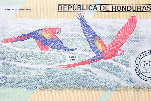 Dwie ary z honduraskich pieniędzy