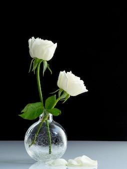 Dwie białe róże dla kochanka