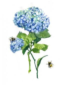 Dwie hortensji niebieskie kwiaty kompozycja akwarela