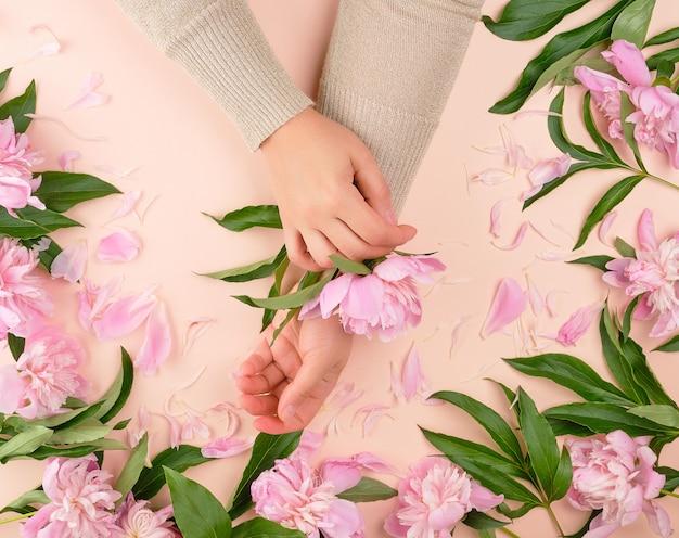 Dwie kobiece dłonie i różowe kwitnące piwonie