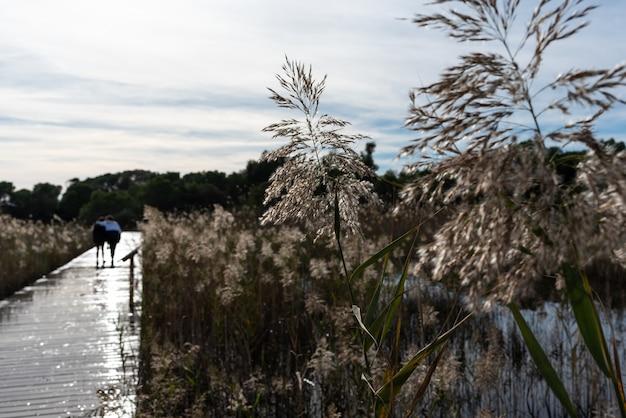 Dwie kobiety chodzą psami po drewnianej kładce nad jeziorem.