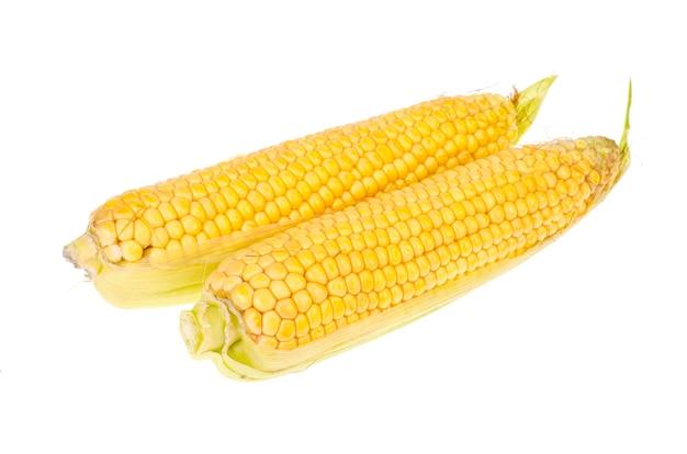 Dwie kolby dojrzałej świeżej kukurydzy żółtej na białym tle.