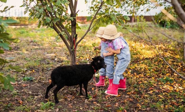 Dwie małe blondynki dzieci bawiące się w ogrodzie. dzieci karmiące czarne owce