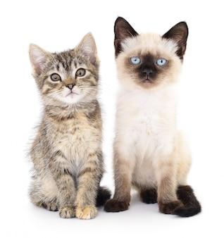 Dwie małe kocięta