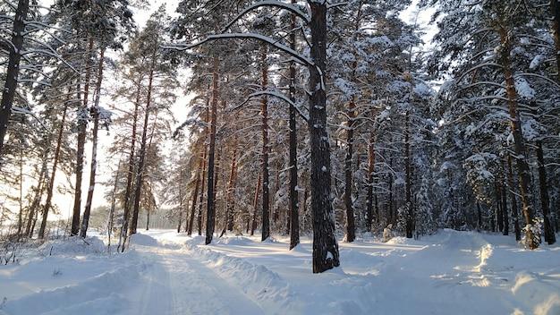 Dwie małe wiejskie drogi w zimowym lesie ze słońcem na drzewach