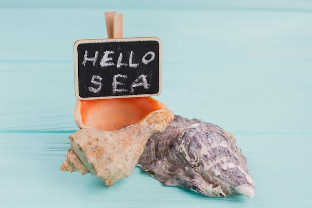 Dwie muszle leżą na niebieskim drewnianym biurku. witam morze napisane na tabliczce znamionowej.