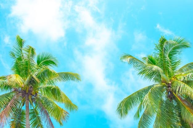 Dwie palmy kokosowe na tle błękitnego nieba z chmurami