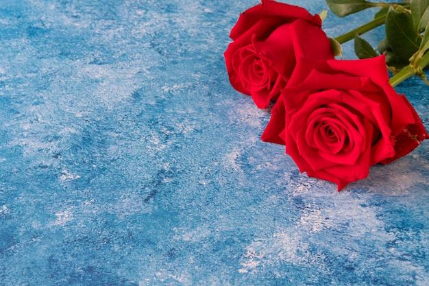 Dwie piękne kwitnące czerwone róże
