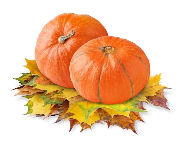 Dwie pomarańczowe dynie nad jesiennymi liśćmi klonu na białym tle na białej powierzchni